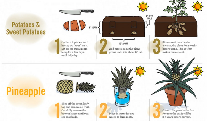 Foods that you can regrow at home
