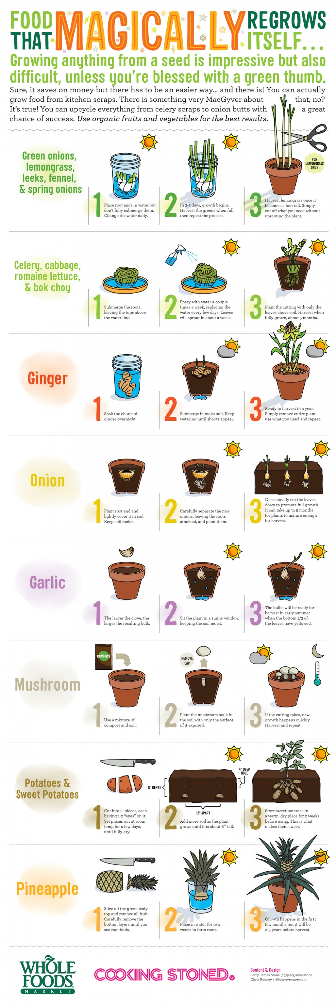 16 foods you can regrow at home